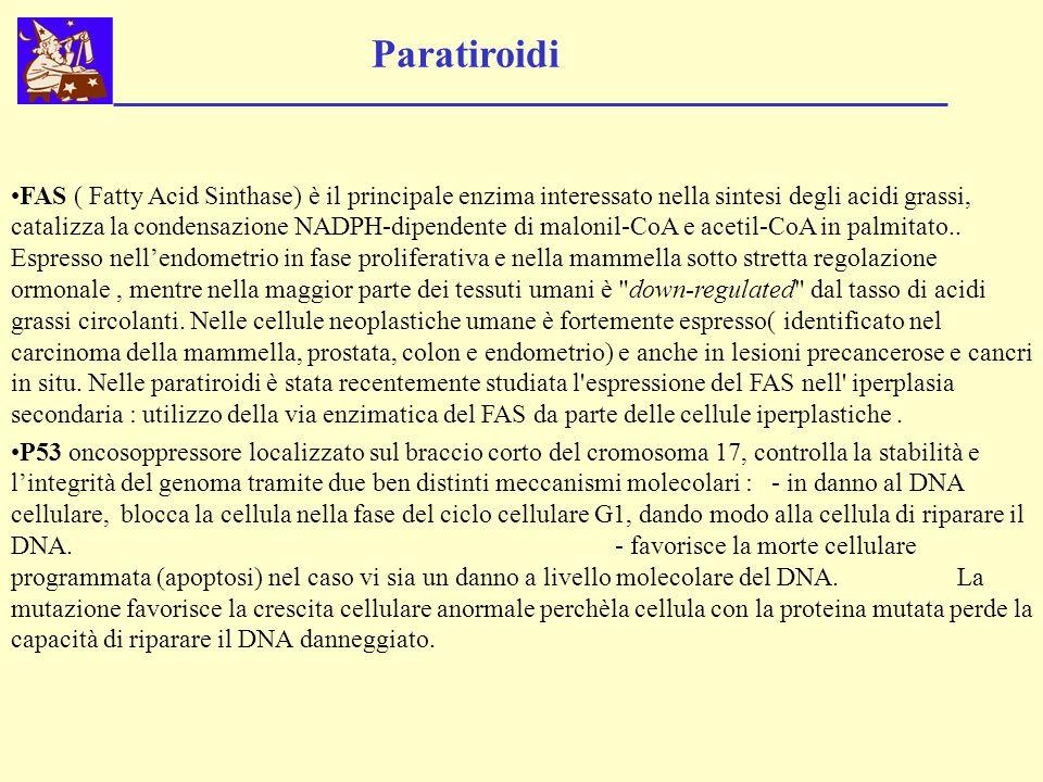 Paratiroidi FAS ( Fatty Acid Sinthase) è il principale enzima interessato nella sintesi degli acidi grassi, catalizza la condensazione NADPH-dipendent
