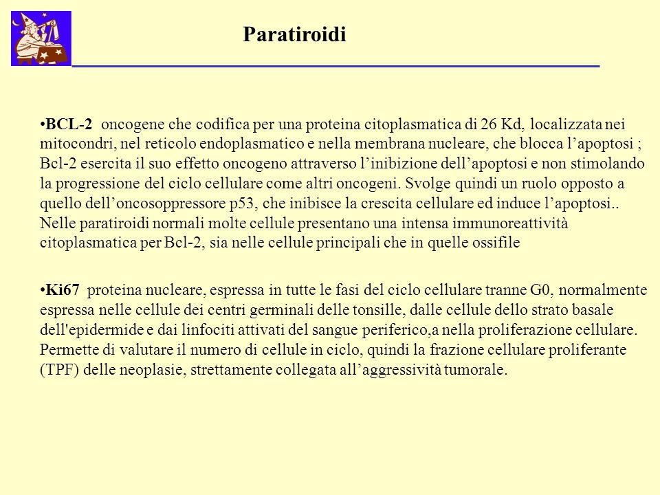 Paratiroidi BCL-2 oncogene che codifica per una proteina citoplasmatica di 26 Kd, localizzata nei mitocondri, nel reticolo endoplasmatico e nella memb