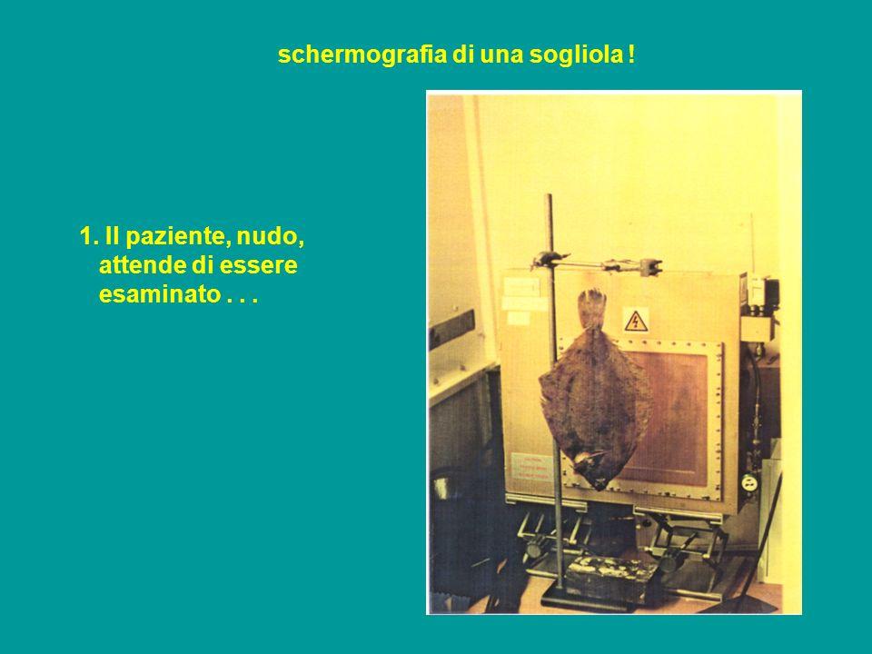 schermografia di una sogliola ! 1. Il paziente, nudo, attende di essere esaminato...
