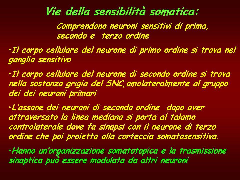 Terminologia per il SNC Sostanza grigia – sostanza bianca -sostanza reticolare °°° Nuclei - gangli Vie nervose ascendenti - discendenti