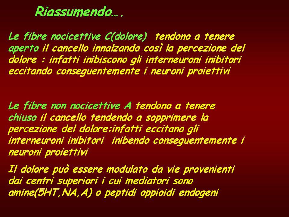 Secondo il comportamento del neurite: Neuroni radicolari Neuroni funicolari o cordonali Neuroni intercalari o internuciali per funzioni integrative