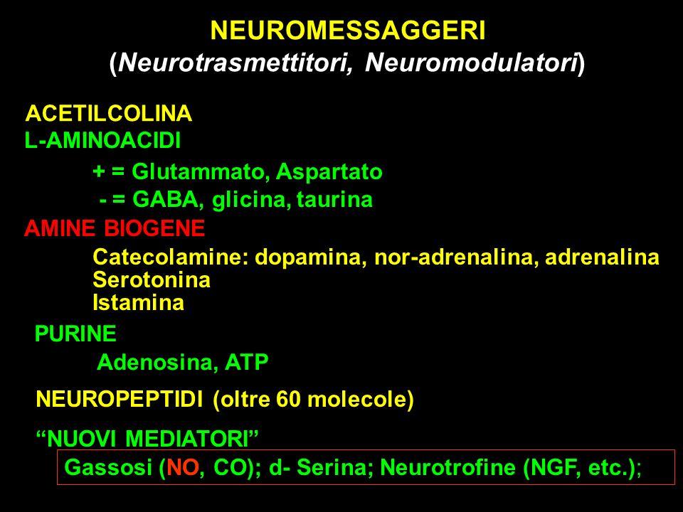 NEUROMESSAGGERI (Neurotrasmettitori, Neuromodulatori) ACETILCOLINA + = Glutammato, Aspartato - = GABA, glicina, taurina AMINE BIOGENE Catecolamine: do
