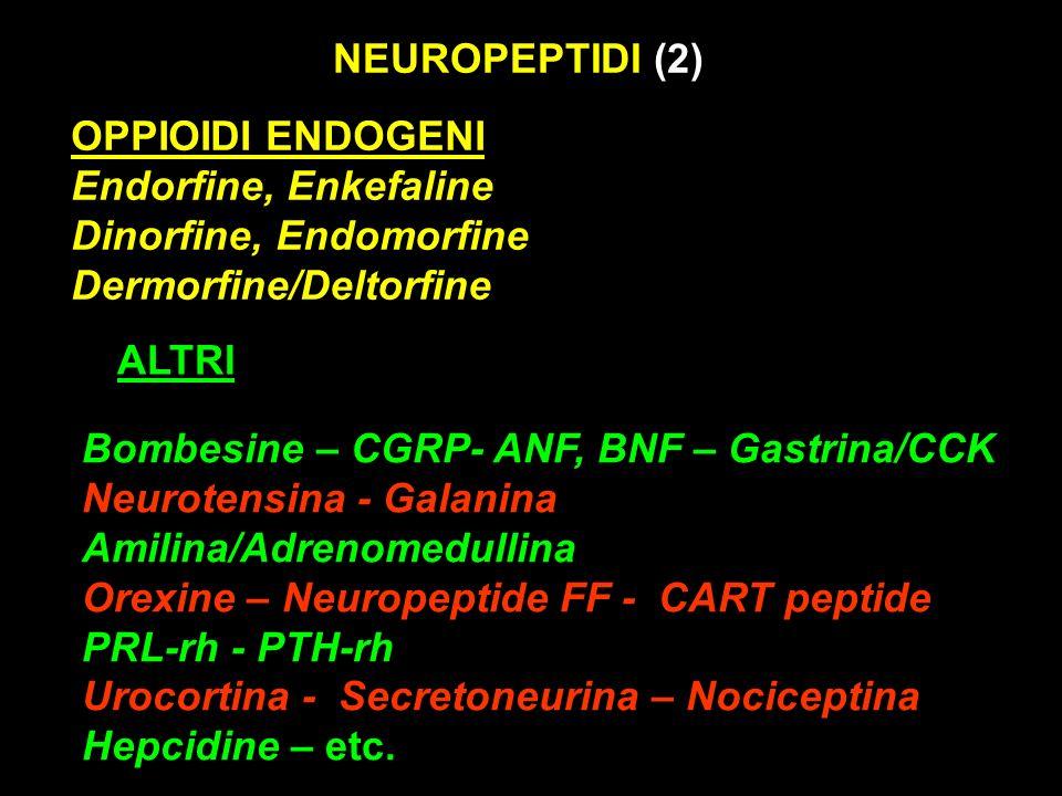 NEUROPEPTIDI (2) OPPIOIDI ENDOGENI Endorfine, Enkefaline Dinorfine, Endomorfine Dermorfine/Deltorfine Bombesine – CGRP- ANF, BNF – Gastrina/CCK Neurot