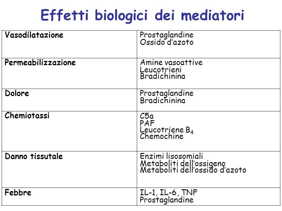 Effetti biologici dei mediatori Vasodilatazione Prostaglandine Ossido dazoto Permeabilizzazione Amine vasoattive Leucotrieni Bradichinina Dolore Prost