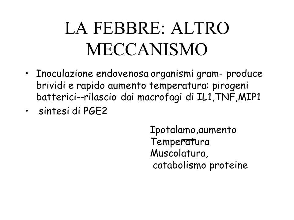 LA FEBBRE: ALTRO MECCANISMO Inoculazione endovenosa organismi gram- produce brividi e rapido aumento temperatura: pirogeni batterici--rilascio dai mac