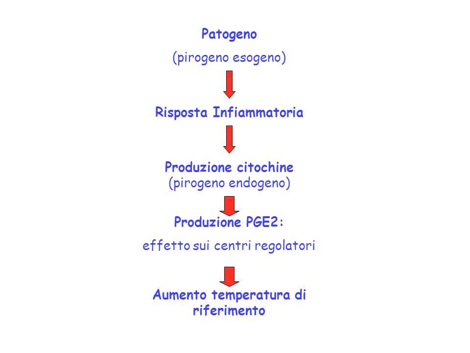 Patogeno (pirogeno esogeno) Risposta Infiammatoria Produzione citochine (pirogeno endogeno) Produzione PGE2: effetto sui centri regolatori Aumento tem