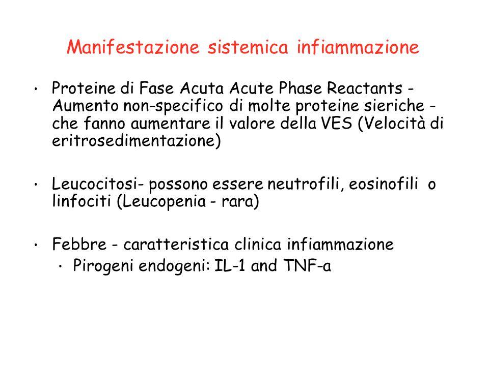 Altri effetti sistemici Sonnolenza, mancanza appetito (citochine) Anemia (ridotta eritropoietina) Mialgia (aumento proteolisi muscolare da IL1 / PGE2)