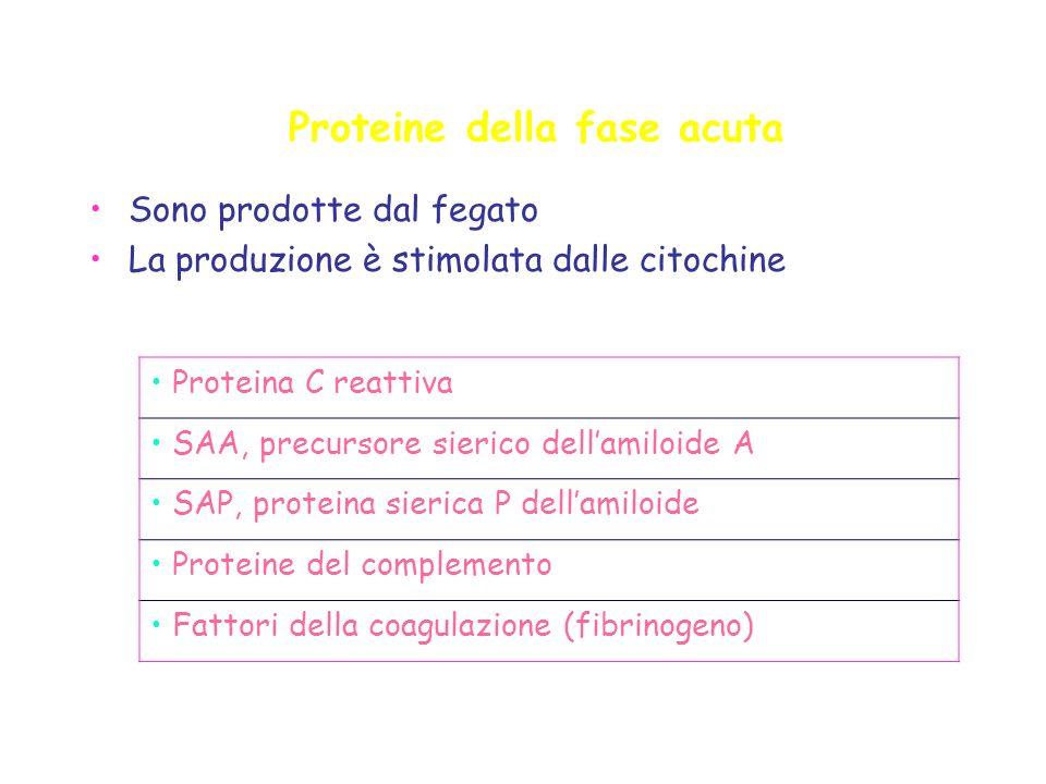 Proteine della fase acuta Sono prodotte dal fegato La produzione è stimolata dalle citochine Proteina C reattiva SAA, precursore sierico dellamiloide