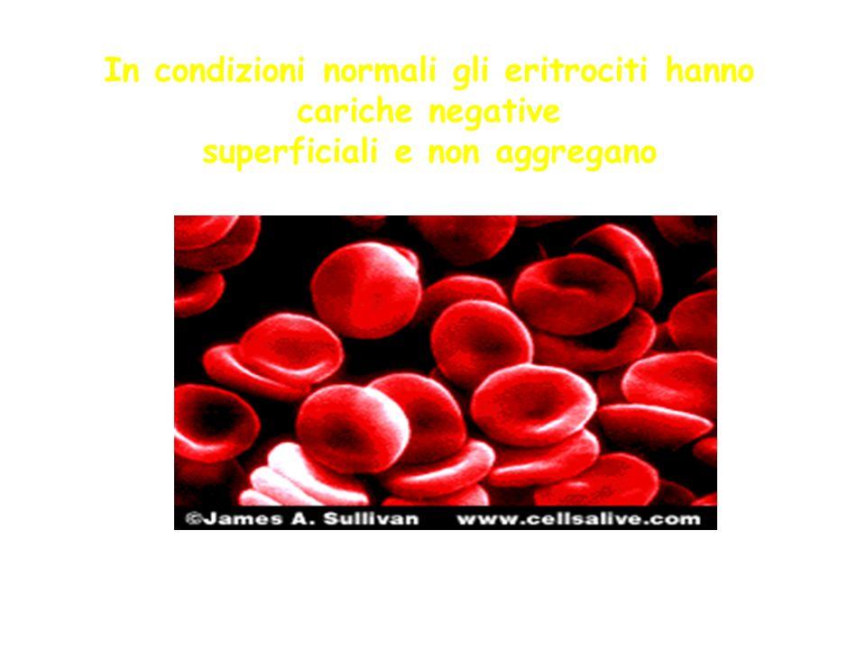 In condizioni normali gli eritrociti hanno cariche negative superficiali e non aggregano