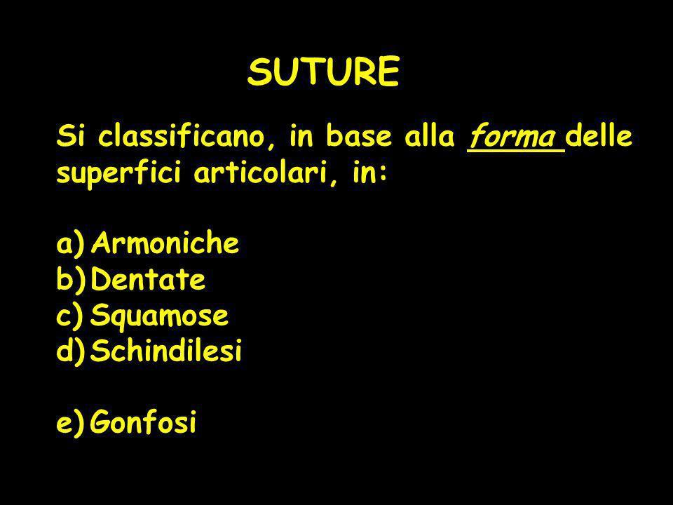 SUTURE Si classificano, in base alla forma delle superfici articolari, in: a)Armoniche b)Dentate c)Squamose d)Schindilesi e)Gonfosi