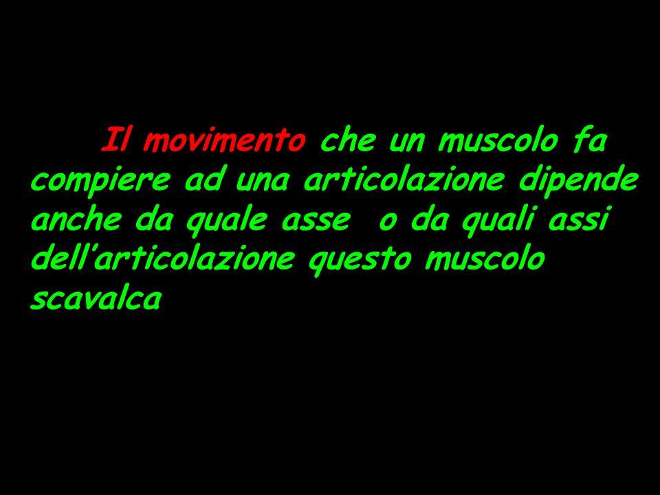 Il movimento che un muscolo fa compiere ad una articolazione dipende anche da quale asse o da quali assi dellarticolazione questo muscolo scavalca