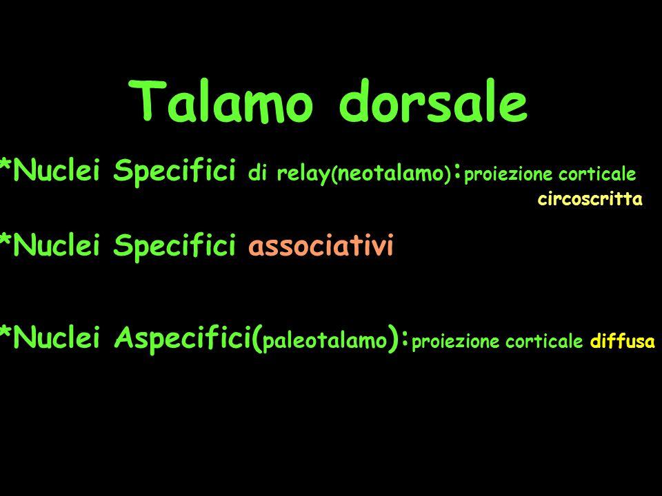 Talamo dorsale *Nuclei Specifici di relay ( neotalamo ) : proiezione corticale circoscritta *Nuclei Specifici associativi *Nuclei Aspecifici( paleotal
