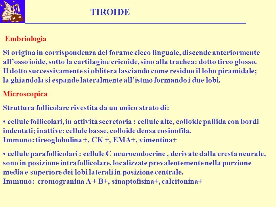Embriologia Si origina in corrispondenza del forame cieco linguale, discende anteriormente allosso ioide, sotto la cartilagine cricoide, sino alla tra