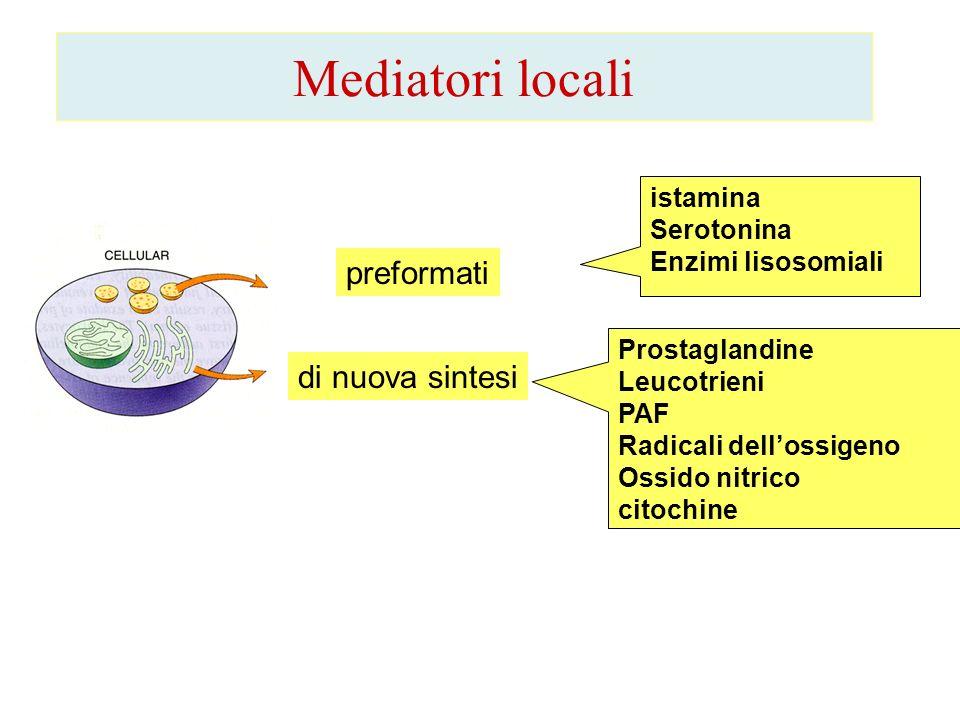 Mediatori locali preformati di nuova sintesi istamina Serotonina Enzimi lisosomiali Prostaglandine Leucotrieni PAF Radicali dellossigeno Ossido nitric