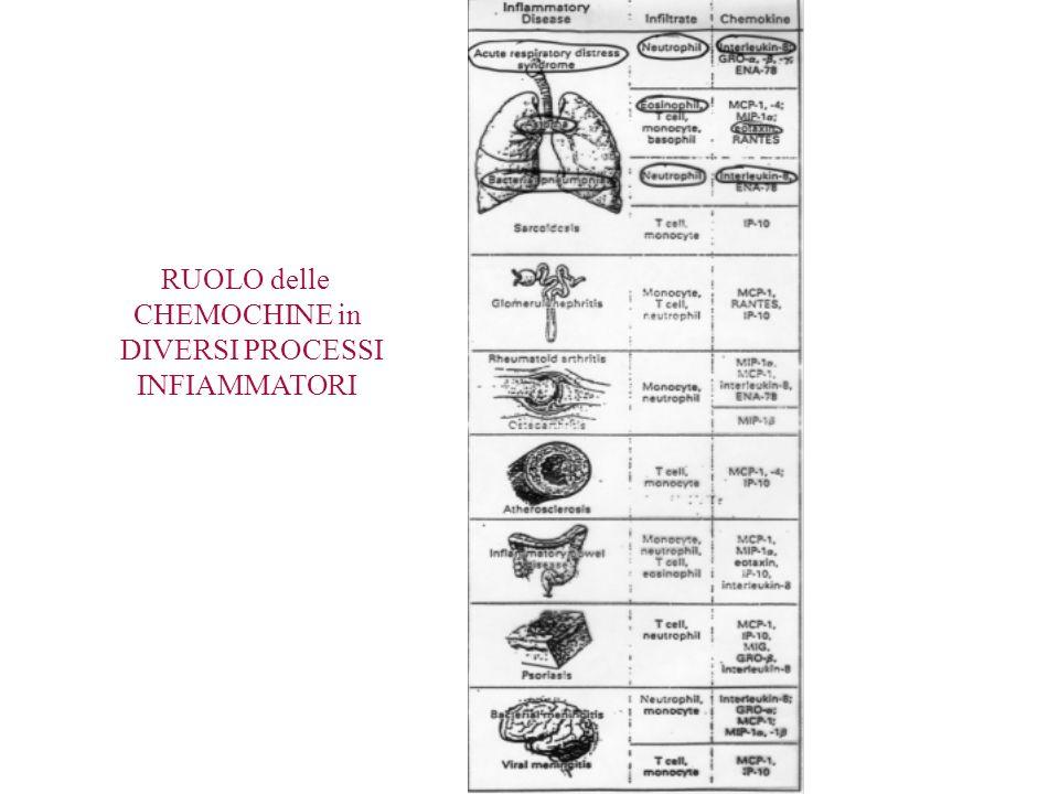 RUOLO delle CHEMOCHINE in DIVERSI PROCESSI INFIAMMATORI