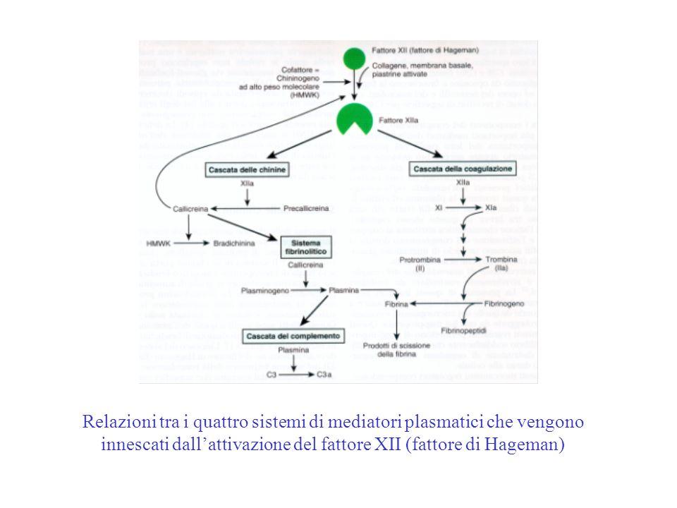 Relazioni tra i quattro sistemi di mediatori plasmatici che vengono innescati dallattivazione del fattore XII (fattore di Hageman)