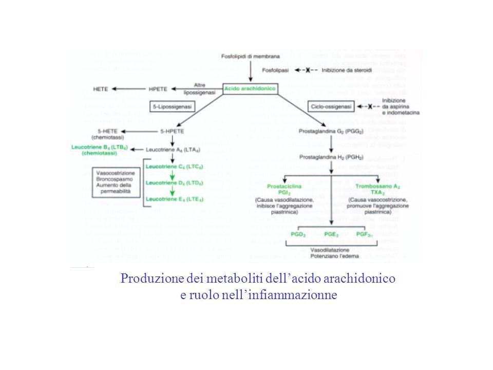 Produzione dei metaboliti dellacido arachidonico e ruolo nellinfiammazionne