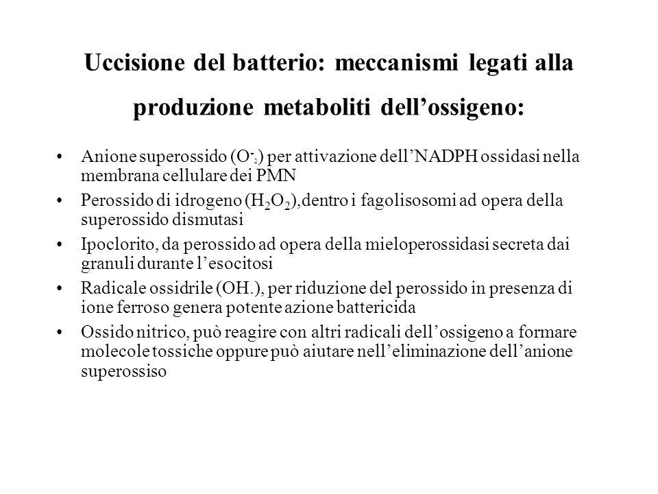 Uccisione del batterio: meccanismi legati alla produzione metaboliti dellossigeno: Anione superossido (O - 2 ) per attivazione dellNADPH ossidasi nell