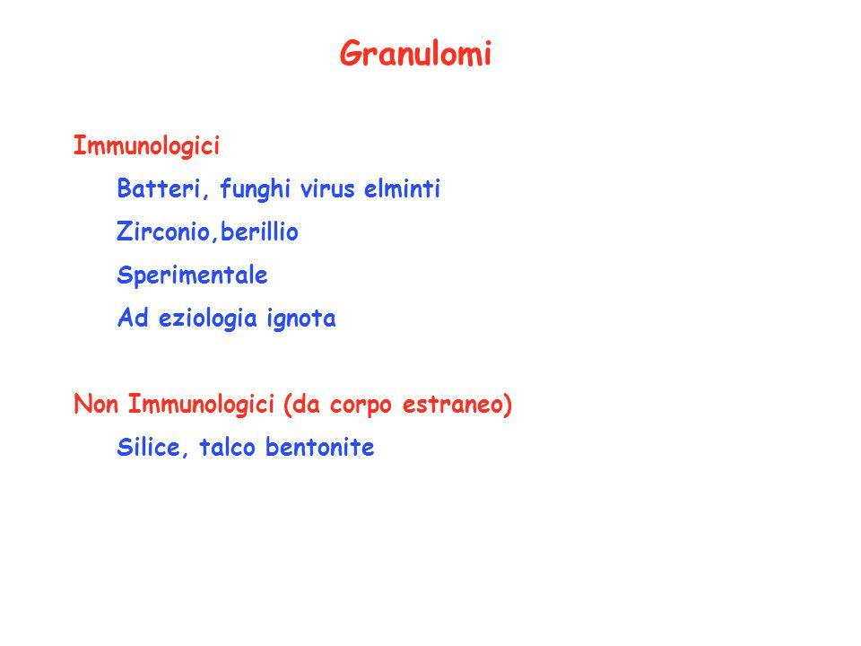 Granulomi Immunologici Batteri, funghi virus elminti Zirconio,berillio Sperimentale Ad eziologia ignota Non Immunologici (da corpo estraneo) Silice, t
