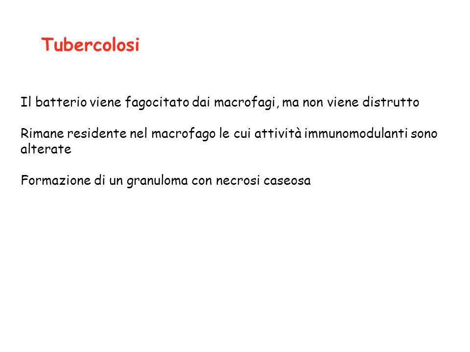 Il batterio viene fagocitato dai macrofagi, ma non viene distrutto Rimane residente nel macrofago le cui attività immunomodulanti sono alterate Formaz