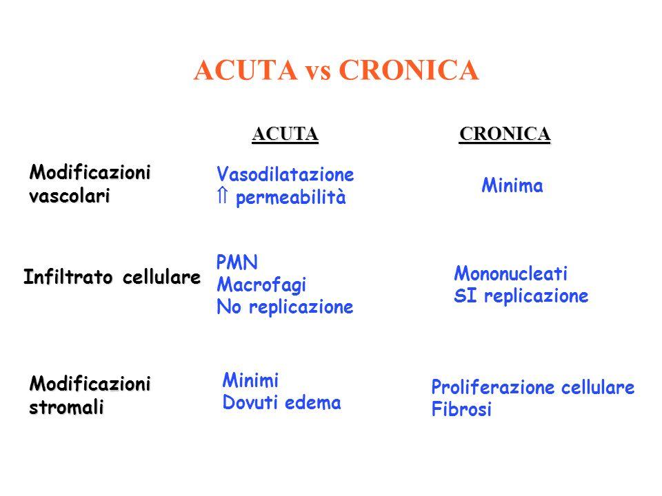 ACUTACRONICA Modificazionivascolari Infiltrato cellulare Modificazionistromali Vasodilatazione permeabilità PMN Macrofagi No replicazione Minimi Dovut