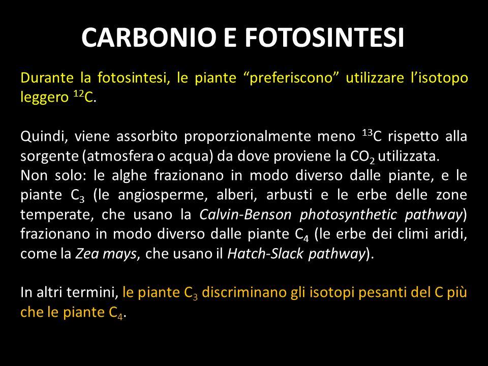 Durante la fotosintesi, le piante preferiscono utilizzare lisotopo leggero 12 C. Quindi, viene assorbito proporzionalmente meno 13 C rispetto alla sor