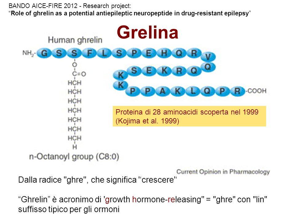 Grelina Dalla radice ''ghre'', che significa 'crescere' Ghrelin è acronimo di 'growth hormone-releasing'' =