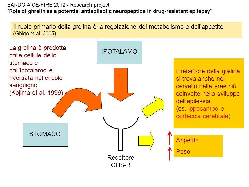 Grelina ed epilessia Modelli animali: Grelina ha un effetto antiepilettico se somministrata in modelli murini con crisi indotte dalla somministrazione di pentilenetetrazolo (Obay et al.
