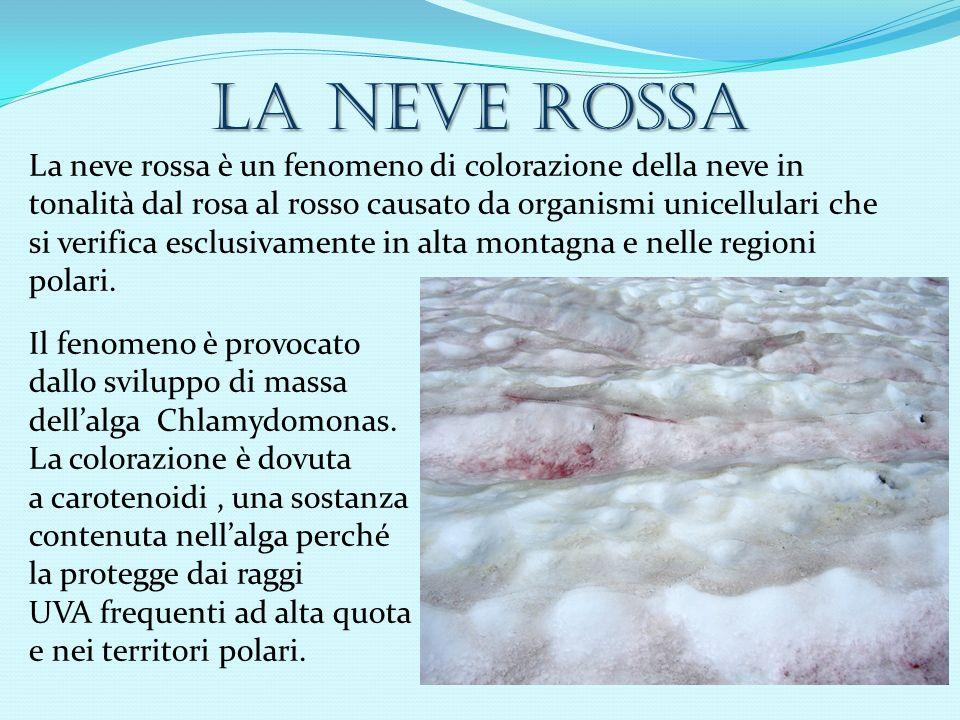 La neve rossa La neve rossa è un fenomeno di colorazione della neve in tonalità dal rosa al rosso causato da organismi unicellulari che si verifica esclusivamente in alta montagna e nelle regioni polari.