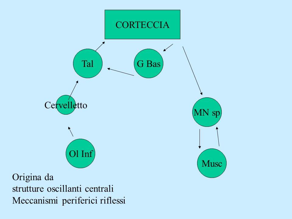 TalG Bas Cervelletto Ol Inf MN sp Musc CORTECCIA Origina da strutture oscillanti centrali Meccanismi periferici riflessi