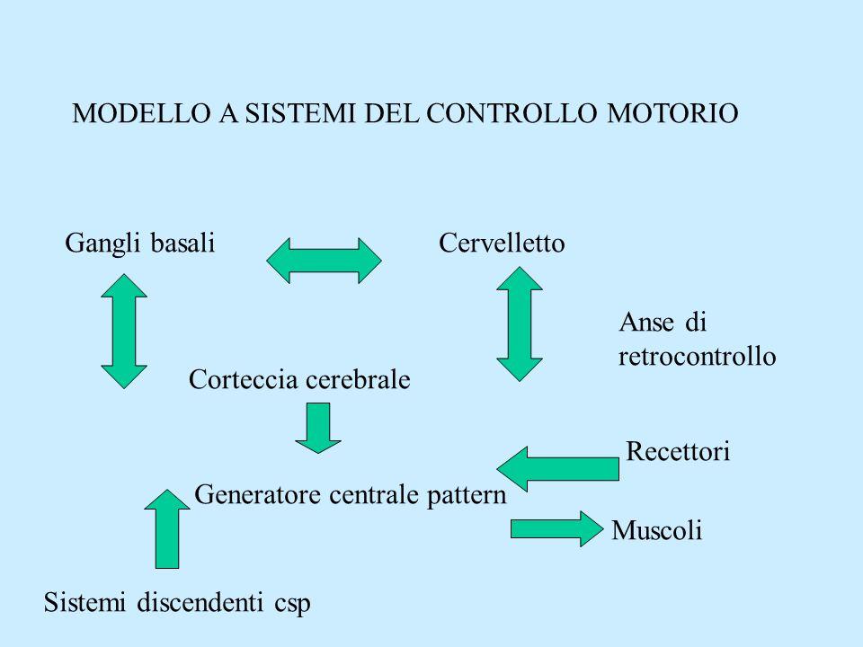 MODELLO A SISTEMI DEL CONTROLLO MOTORIO Gangli basaliCervelletto Corteccia cerebrale Generatore centrale pattern Sistemi discendenti csp Recettori Mus