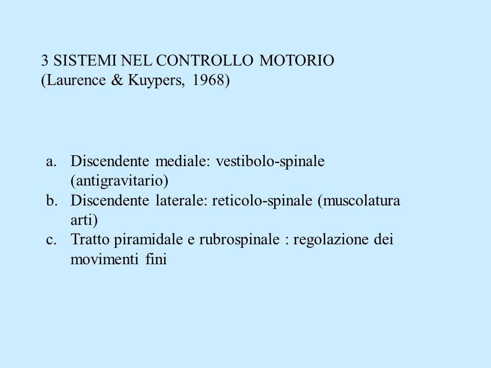 3 SISTEMI NEL CONTROLLO MOTORIO (Laurence & Kuypers, 1968) a.Discendente mediale: vestibolo-spinale (antigravitario) b.Discendente laterale: reticolo-