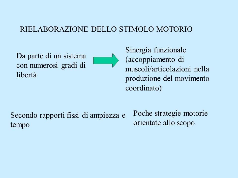 RIELABORAZIONE DELLO STIMOLO MOTORIO Da parte di un sistema con numerosi gradi di libertà Sinergia funzionale (accoppiamento di muscoli/articolazioni