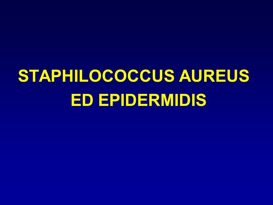 STAPHILOCOCCUS AUREUS ED EPIDERMIDIS