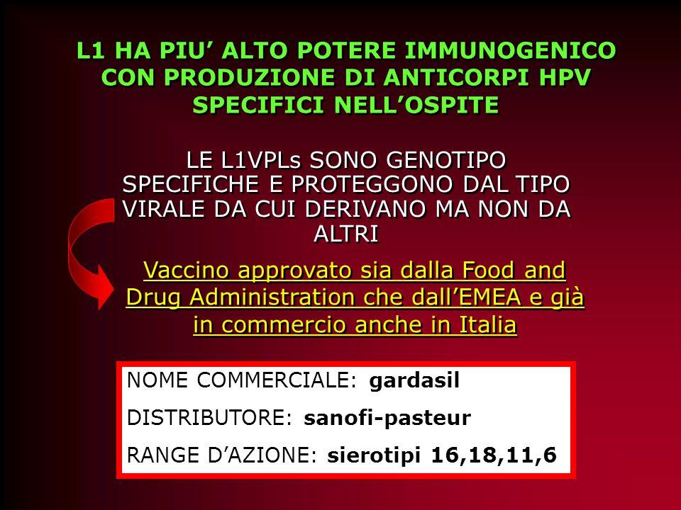 La capacità immunogenica delle proteine capsidiche dellHPV ( L1 e L2) è legata alla conformazione sterica delle stesse si utilizzano insetti, lieviti