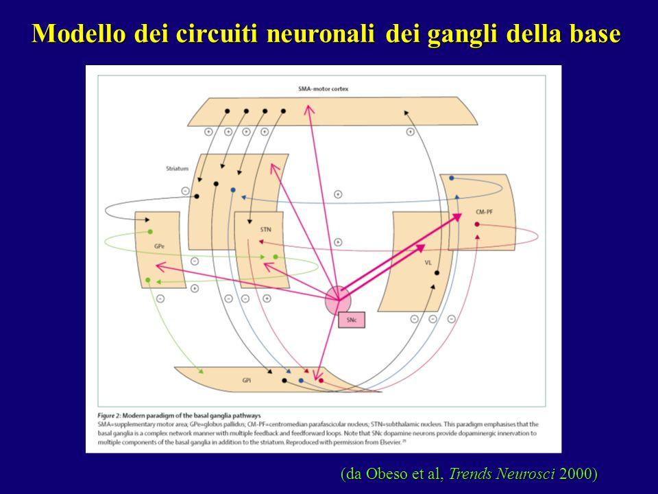 Modello dei circuiti neuronali dei gangli della base (da Obeso et al, Trends Neurosci 2000)