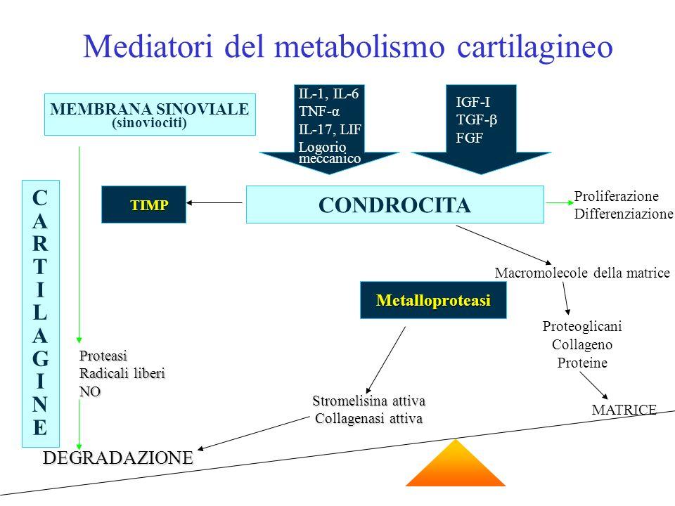 MEMBRANA SINOVIALE (sinoviociti) IL-1, IL-6 TNF-α IL-17, LIF Logorio meccanico IGF-I TGF- FGF CONDROCITA TIMP TIMP Proliferazione Differenziazione CAR