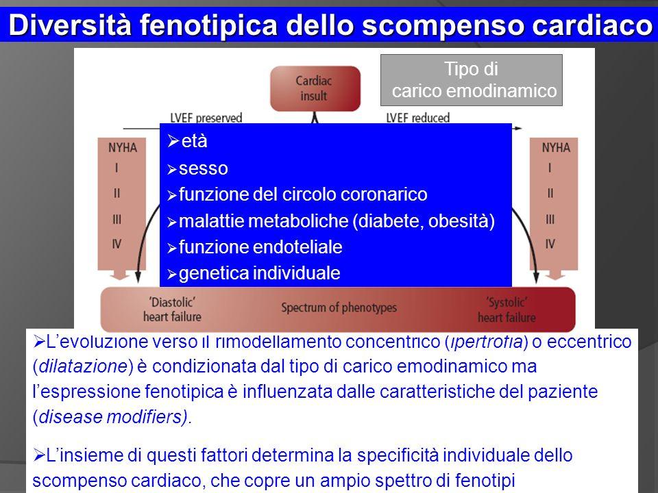 Diversità fenotipica dello scompenso cardiaco Levoluzione verso il rimodellamento concentrico (ipertrofia) o eccentrico (dilatazione) è condizionata dal tipo di carico emodinamico ma lespressione fenotipica è influenzata dalle caratteristiche del paziente (disease modifiers).