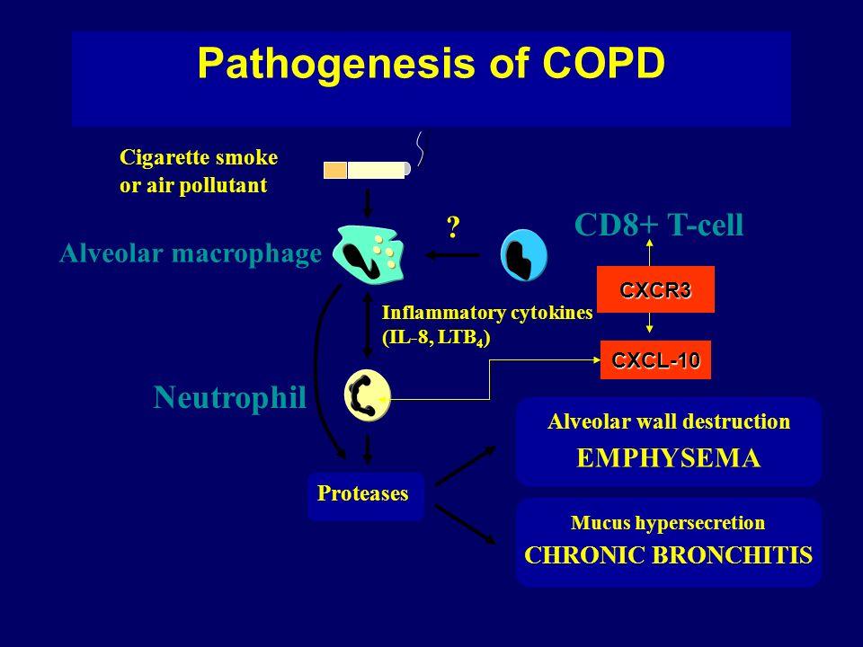 Pathogenesis of COPD Cigarette smoke or air pollutant Alveolar macrophage Neutrophil Proteases ? CD8+ T-cell Alveolar wall destruction EMPHYSEMA Mucus