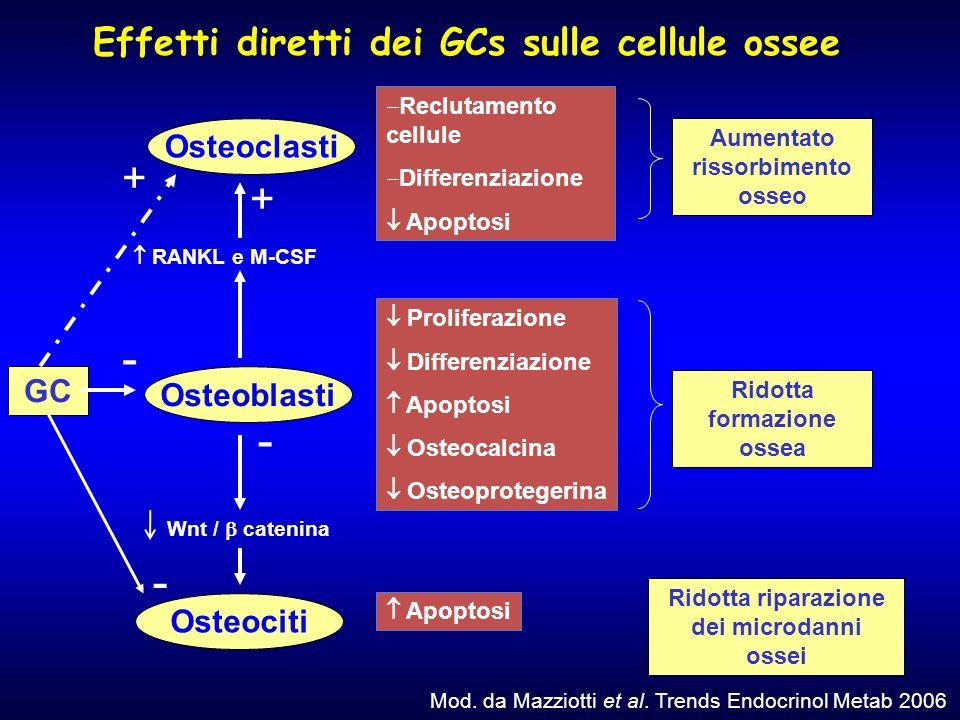 Effetti diretti dei GCs sulle cellule ossee Osteoclasti Osteoblasti Osteociti Reclutamento cellule Differenziazione Apoptosi Proliferazione Differenzi