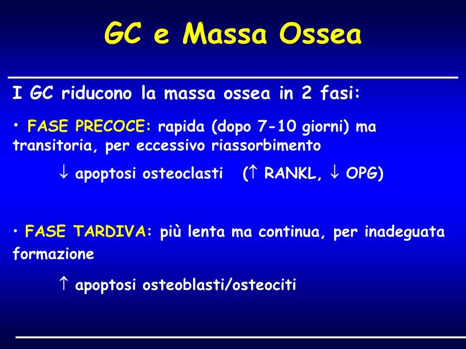 I GC riducono la massa ossea in 2 fasi: FASE PRECOCE: rapida (dopo 7-10 giorni) ma transitoria, per eccessivo riassorbimento apoptosi osteoclasti ( RA