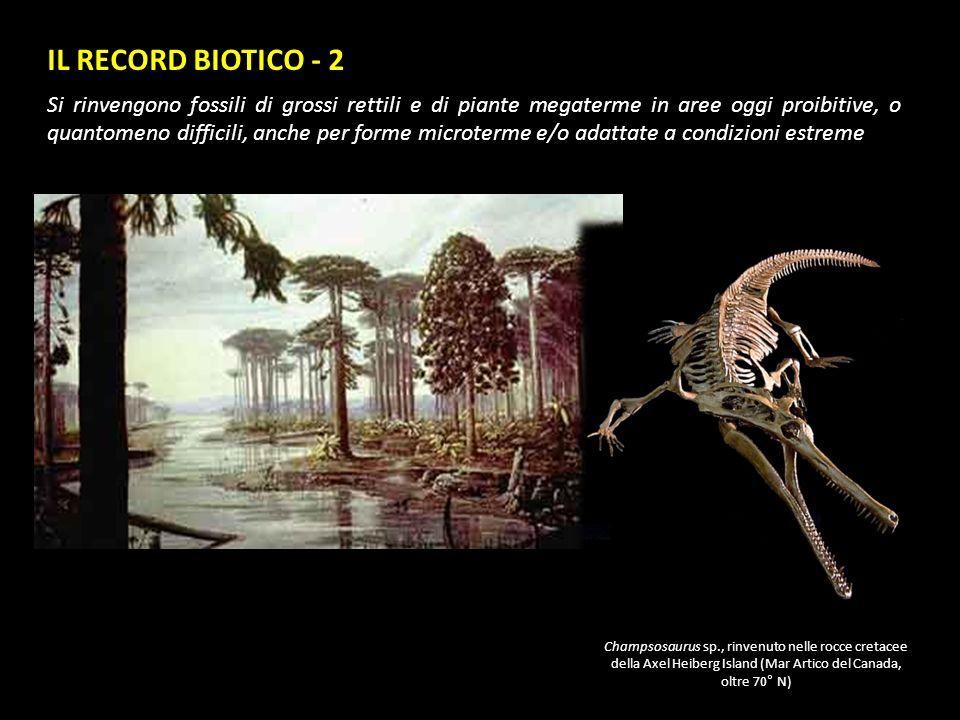IL RECORD BIOTICO - 2 Si rinvengono fossili di grossi rettili e di piante megaterme in aree oggi proibitive, o quantomeno difficili, anche per forme m