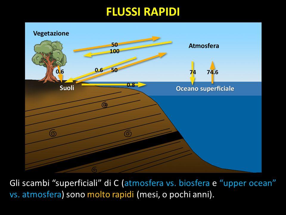 FLUSSI RAPIDI Gli scambi superficiali di C (atmosfera vs. biosfera e upper ocean vs. atmosfera) sono molto rapidi (mesi, o pochi anni).
