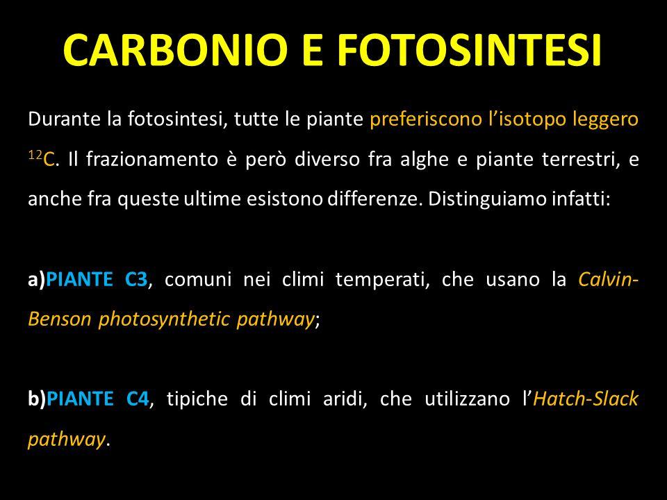 Durante la fotosintesi, tutte le piante preferiscono lisotopo leggero 12 C. Il frazionamento è però diverso fra alghe e piante terrestri, e anche fra