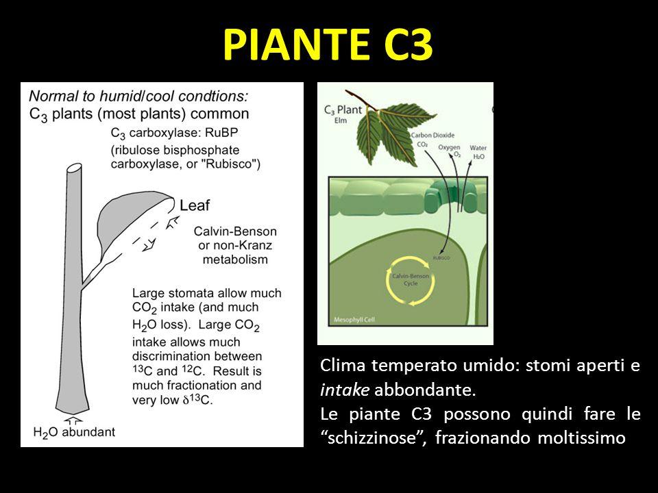 PIANTE C3 Clima temperato umido: stomi aperti e intake abbondante. Le piante C3 possono quindi fare le schizzinose, frazionando moltissimo