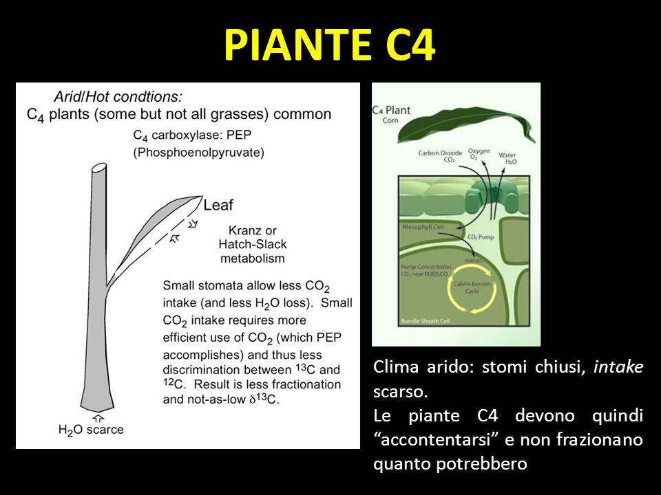 PIANTE C4 Clima arido: stomi chiusi, intake scarso. Le piante C4 devono quindi accontentarsi e non frazionano quanto potrebbero