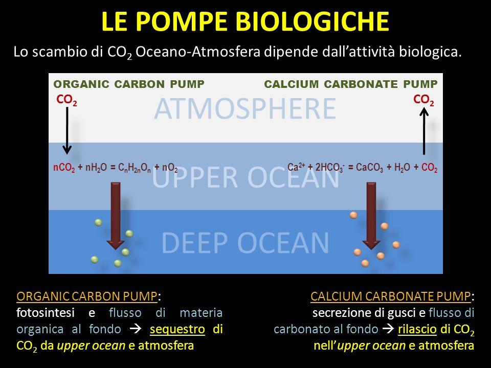 ORGANIC CARBON PUMP: fotosintesi e flusso di materia organica al fondo sequestro di CO 2 da upper ocean e atmosfera CALCIUM CARBONATE PUMP: secrezione