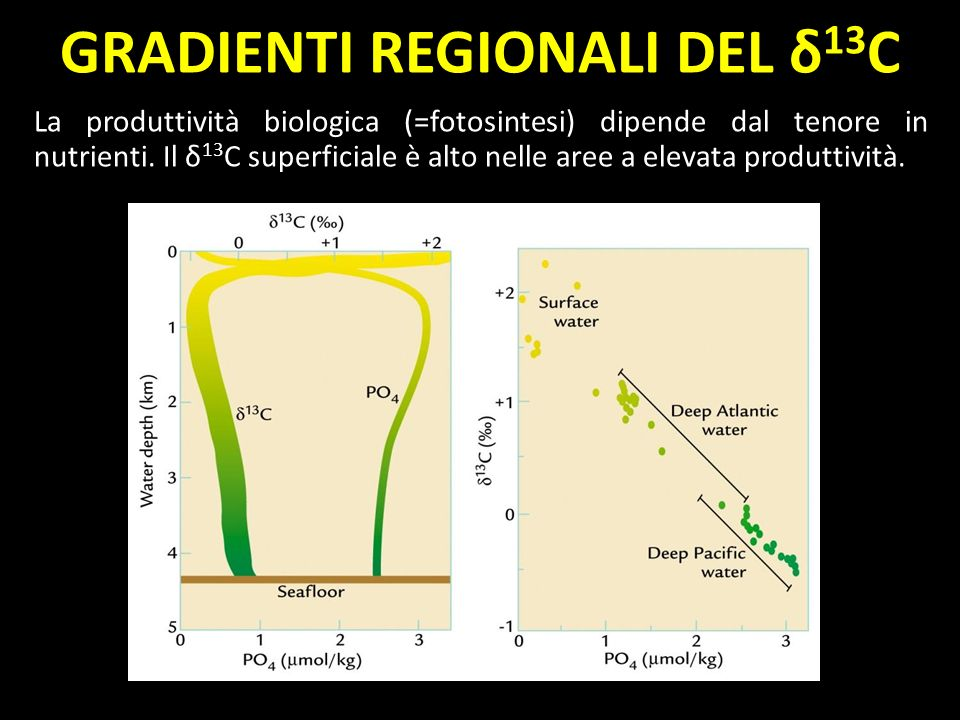 La produttività biologica (=fotosintesi) dipende dal tenore in nutrienti. Il δ 13 C superficiale è alto nelle aree a elevata produttività. GRADIENTI R