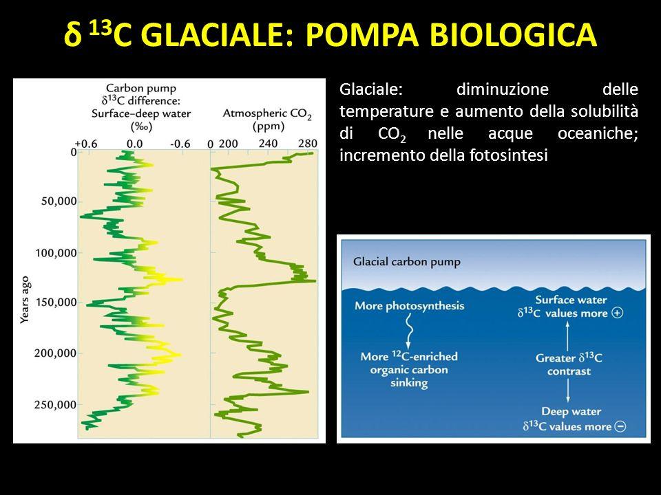 δ 13 C GLACIALE: POMPA BIOLOGICA Glaciale: diminuzione delle temperature e aumento della solubilità di CO 2 nelle acque oceaniche; incremento della fo