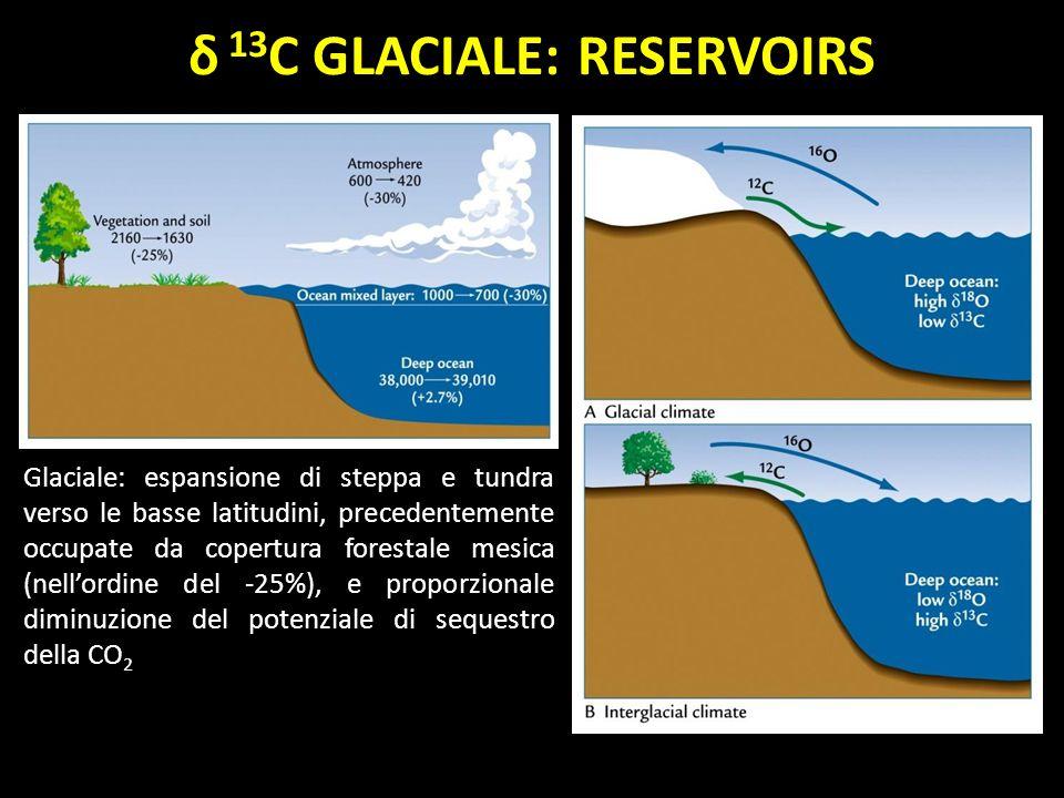 Glaciale: espansione di steppa e tundra verso le basse latitudini, precedentemente occupate da copertura forestale mesica (nellordine del -25%), e pro
